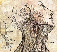 Wunderformel für die Adern: L-Arginin