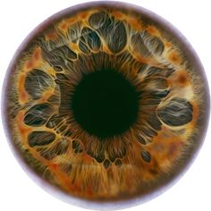 """giddygirlie: """" """" Iris paintings by Marc Quinn """" One of my favorite part of dissection labs was eyes. The iris is so interesting and beautiful. Realistic Eye Drawing, Realistic Oil Painting, Marc Quinn, Iris Painting, Eye Painting, Fotografia Macro, Human Eye, Human Soul, Eye Photography"""