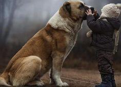 Top 10 Tales Of Animals Saving Humans