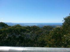 Illawarra treetops walk
