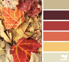 Living room decor fall colors design seeds 52 new Ideas Colour Pallette, Color Palate, Colour Schemes, Color Combos, Color Patterns, Maroon Color Palette, Design Seeds, Colour Board, Color Swatches