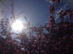 Sun #NynkeHovenga