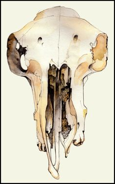 Friday February 5th (2010) Sheep's skull    http://anthonyfelton.com/photodiary2/displayn.php?n=1742=02=2010==0#