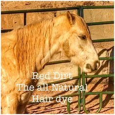 """Maybe it's neigh-beline. the all natural """"Red dirt"""" hair color All Natural Hair Dye, Natural Red, Natural Hair Styles, Horse Hair, Wild West, Dyed Hair, Mustang, Ranch, Hair Color"""