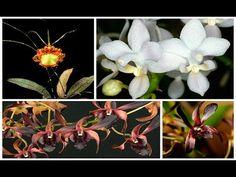Получен спецзаказ Орхидей! + Сюрприз!