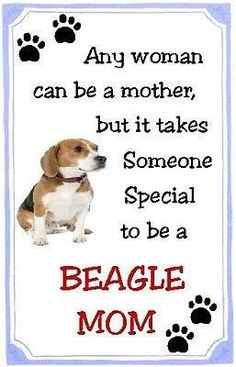 Beagle MOM!!! So true. Beagles are tough and people who don't have a beagle (or a hound in general) just DO not understand!