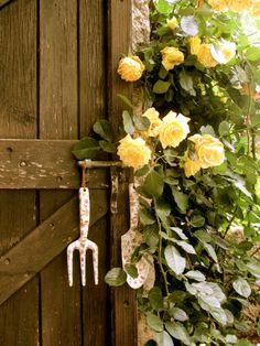 garden tools, wood door and yellow climbing roses. Yellow Cottage, Rose Cottage, Garden Gates, Garden Tools, English Country Gardens, Climbing Roses, Mellow Yellow, Yellow Roses, Garden Inspiration