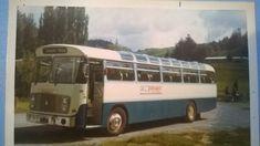 Buses, New Zealand, Vehicles, Car, Vehicle