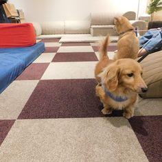 ローソファ専門店HAREM / 偶数月に定例で開催しているペットイベント「愛犬とローソファを試してみよう」。ワンちゃんのヘルニア予防や骨折予防にと、たくさんの方にご来店いただいてます!次回開催・ご注意点・参加方法などはHP詳細にて◎ ※ 完全予約制・先着順