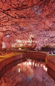 元荒川の夜桜 Japanese Landscape, Fantasy Landscape, Beautiful Nature Wallpaper, Beautiful Landscapes, Cherry Blossom Japan, Cherry Blossoms, Landscape Photography, Nature Photography, Beautiful Places