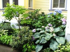 Effective use of the big hosta..food for thought.