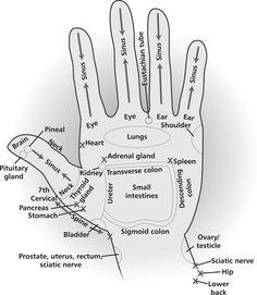 Hand: Reflexology Reference Charts - Reflexology