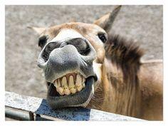 Varias fotos de risa. | Quiero más diseño