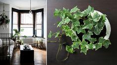 Gröna växter ökar inte bara trivseln hemma. Placerade i sovrummet kan de bidra till bättre sömnkvalitet.