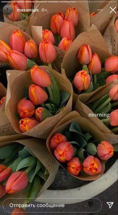 Flower Aesthetic, Summer Aesthetic, My Flower, Beautiful Flowers, Flowers Nature, Fresh Flowers, Pink Flowers, Instagram Story Ideas, Planting Flowers