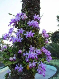 i wish i had trees to grow my orchids on, as I don't have I grow my in pots.