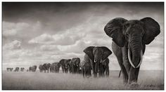 Nick Brandt elephants 4