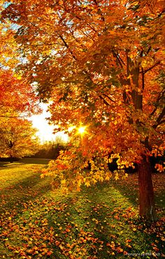 """Orange You Glad"" Wisconsin Horizons By Phil Koch. Lives in Milwaukee, Wisconsin, USA. http://phil-koch.artistwebsites.com"