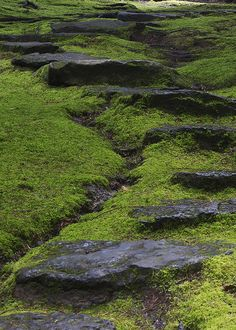 Mossy Walk With Stepping Stones by stokes rx, via Flickr