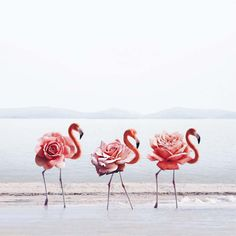 Marvelous and Poetic Photomontages by Luisa Azevedo – Fubiz Media