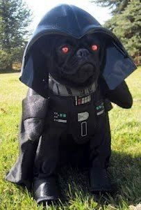 Pug Vader, lord of the bark side. LOL