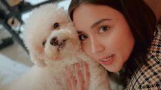 Kathryn Bernardo, Anime Girl Cute, Friends Family, Teddy Bear, Animals, Animales, Animaux, Teddy Bears, Animal
