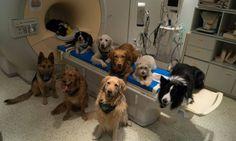 Seu cachorro entende o que você fala, garante estudo - Jornal O Globo