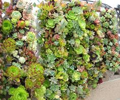 A beautiful vertical garden. This article discusses tube planting for vertical gardening. It looks simple and beautiful! I think I might give it a try.