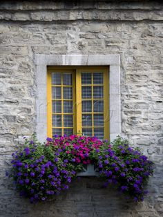 My future home will have a Window Box of beautiful flowers.  paint my back doors????