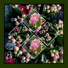 Rose e boccioli d'autunno...
