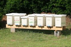 "Packages or Nucs — Which is a Better Start?  ""So, to recap the pros and cons of package bees: (1) they cost less than a nuc (2) you'll get them earlier in the spring. The cons are (1) they might not accept the hive you put them in (2) you need to feed (3) they have nothing started yet."""