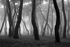 Misty Forest by Twostar K on 500px
