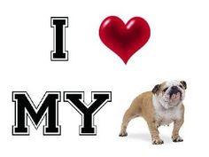 i love my english bulldog