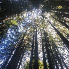 Santa Cruz CA:  by revaewzil