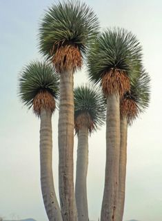 "Palm Trees.....always remind me of Tim Rooney, ""they went up like two tiki torches!"" As story for bevy's with my LLBB"