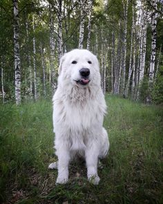 11 big fluffy dog breeds perfect to cuddle with russian photographer captures the charming connection between little kids and their big dogs Fluffy Dog Breeds, Large Dog Breeds, Large Dogs, Big Dogs, Dogs And Puppies, White Dogs Breeds, Best Big Dog Breeds, Chow Puppies, Puppies Tips