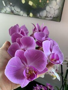 Orchid Fertilizer, Orchids, Succulents, Plants, Collection, Art, Roses, Flowers, Art Background