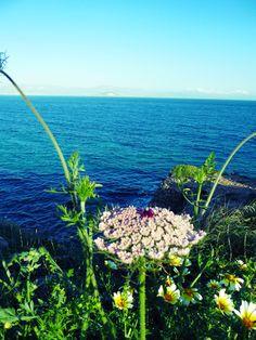 Wild Flowers on Paros, Greece Louise Johnson