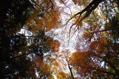 成田山/森のささやき