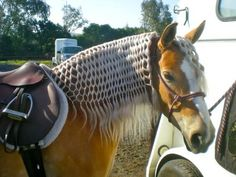 Horse Mane Braids Collection pin on horses 1 and cowboys Horse Mane Braids. Here is Horse Mane Braids Collection for you. Horse Mane Braids horse owners braid horses manes for this reason. Cute Horses, Pretty Horses, Horse Love, Beautiful Horses, Animals Beautiful, Horse Mane Braids, Horse Hair Braiding, Caballos Clydesdale, Horse Tail
