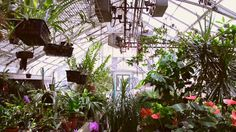 Greenhouse - Free Stock Video - License: CC0 Public Domain (Free for commercial use No attribution required) Greenhouse - Free Stock Footage