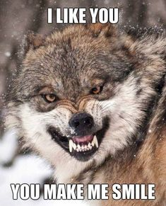 This is my warning face Wolf Images, Wolf Photos, Wolf Pictures, Wolves Of Wall Street, Wolf Meme, Snarling Wolf, Angry Wolf, Wolf Stuff, Wolf Spirit Animal