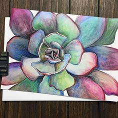 Vibrant succulent drawing completed in Derwent Inktense pencils || Flower Greeting Card || Succulent Art.