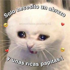 Memes Estúpidos, Stupid Memes, Best Memes, Funny Memes, Cute Cat Memes, Cute Love Memes, Memes Lindos, Cheesy Quotes, Sad Cat