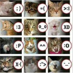 Cat emote