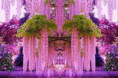 Purple Wisteria Flower Seeds Perennial Climbing Plants Bonsai Home Garden Most Beautiful Gardens, Most Beautiful Flowers, Exotic Flowers, Pretty Flowers, Purple Flowers, Purple Trees, Wisteria Tree, Purple Wisteria, Wisteria Japan