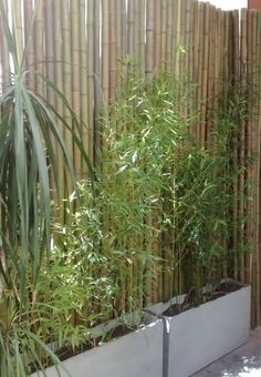 Bamboo Fence Ideas 7 Though ancient around strategy, your pergola continues to be enduring somewhat Balcony Design, Patio Design, Garden Design, Balcony Ideas, Patio Ideas, Backyard Ideas, Back Gardens, Small Gardens, Outdoor Gardens
