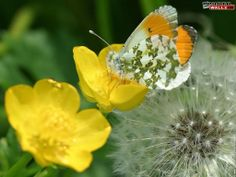 Pictures of spring time   Spring Desktop Wallpapers - 2011-2012 HD High Resolution Wallpapers ...