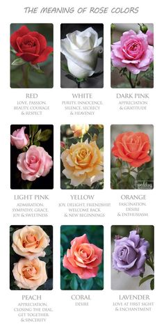 The Meaning Behind Colors In Your Wedding Bouquet ❤ Make sure your bouquet reflects your personalty. Find out what colours mean in your wedding bouquet, and make it extra special. See more: www.weddingforward.com/ meaning-behind-colors-wedding-bouquet/ #weddings #bouquet