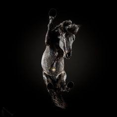 Under Horse Project Photographer: Andrius Burba / Underlook